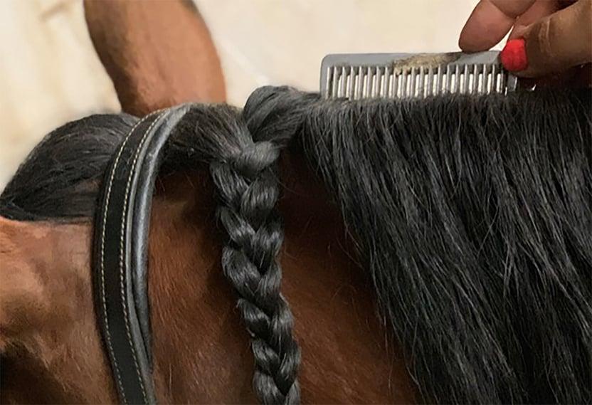 horse_mane